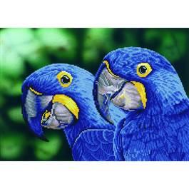 Сини папагали