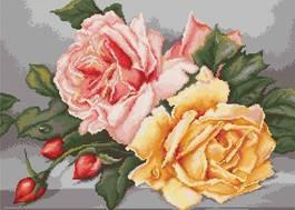B485 Рози