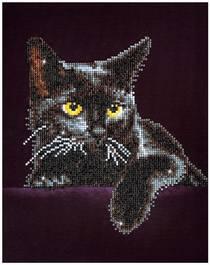 Нощна котка
