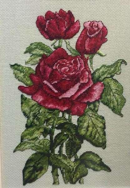 BK1180 - роза